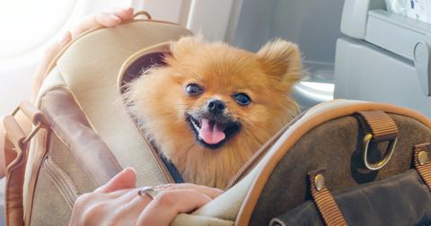 dog-airplane-1607095466155.jpg