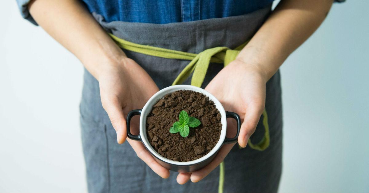 growingmintplant-1534279143121-1534279144982.jpg