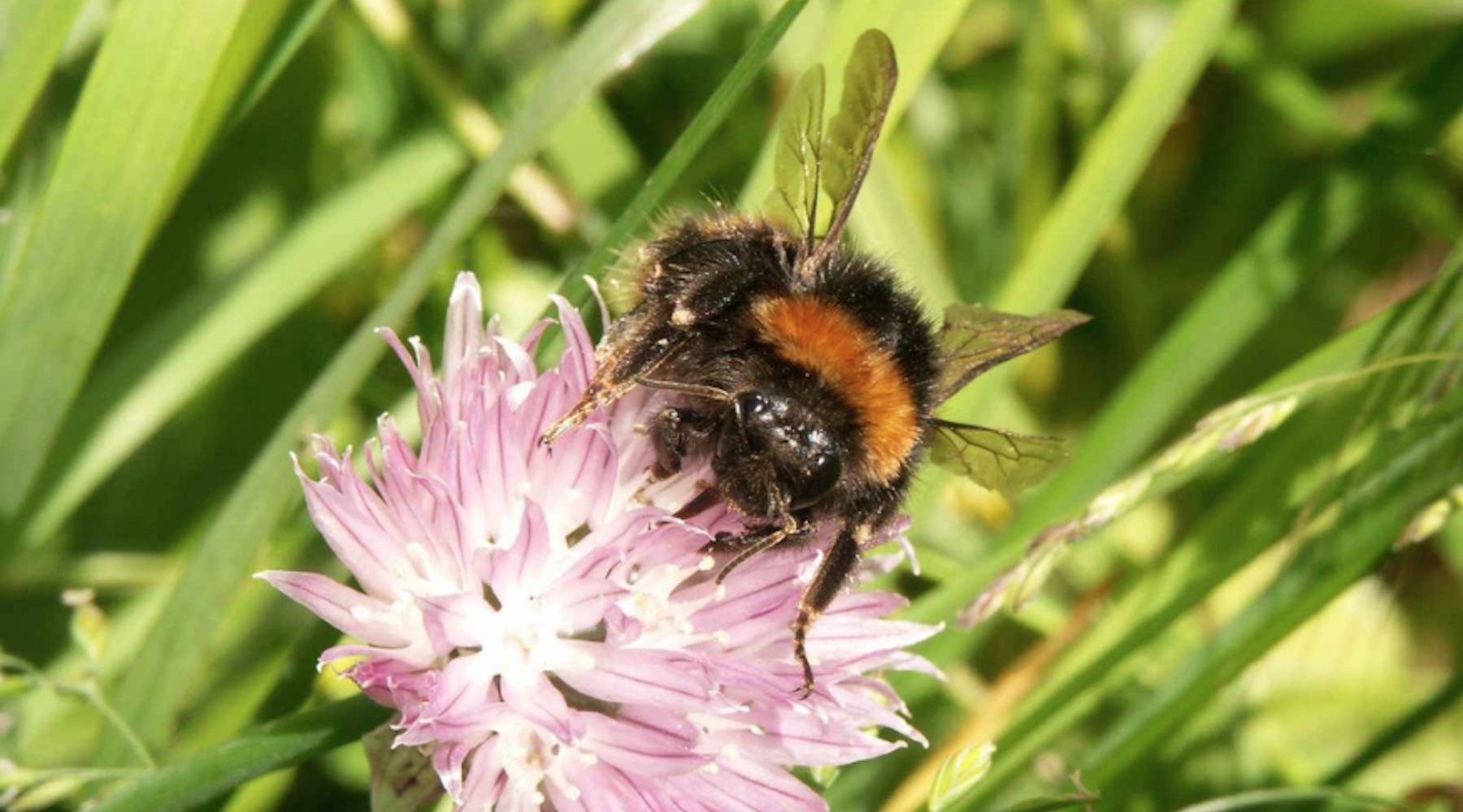 bees-1510332670905-1510332673227.jpg