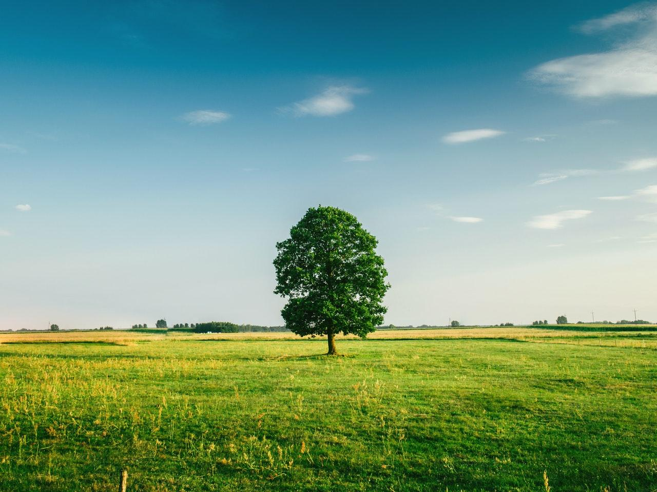 tree-field-horizon-countryside-81413-1502469186307.jpeg