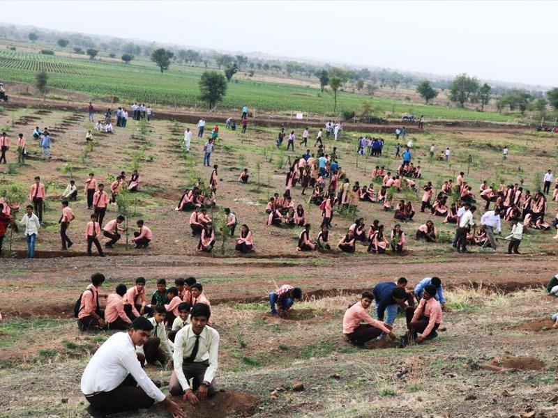 planting-india-1499296635957.jpg
