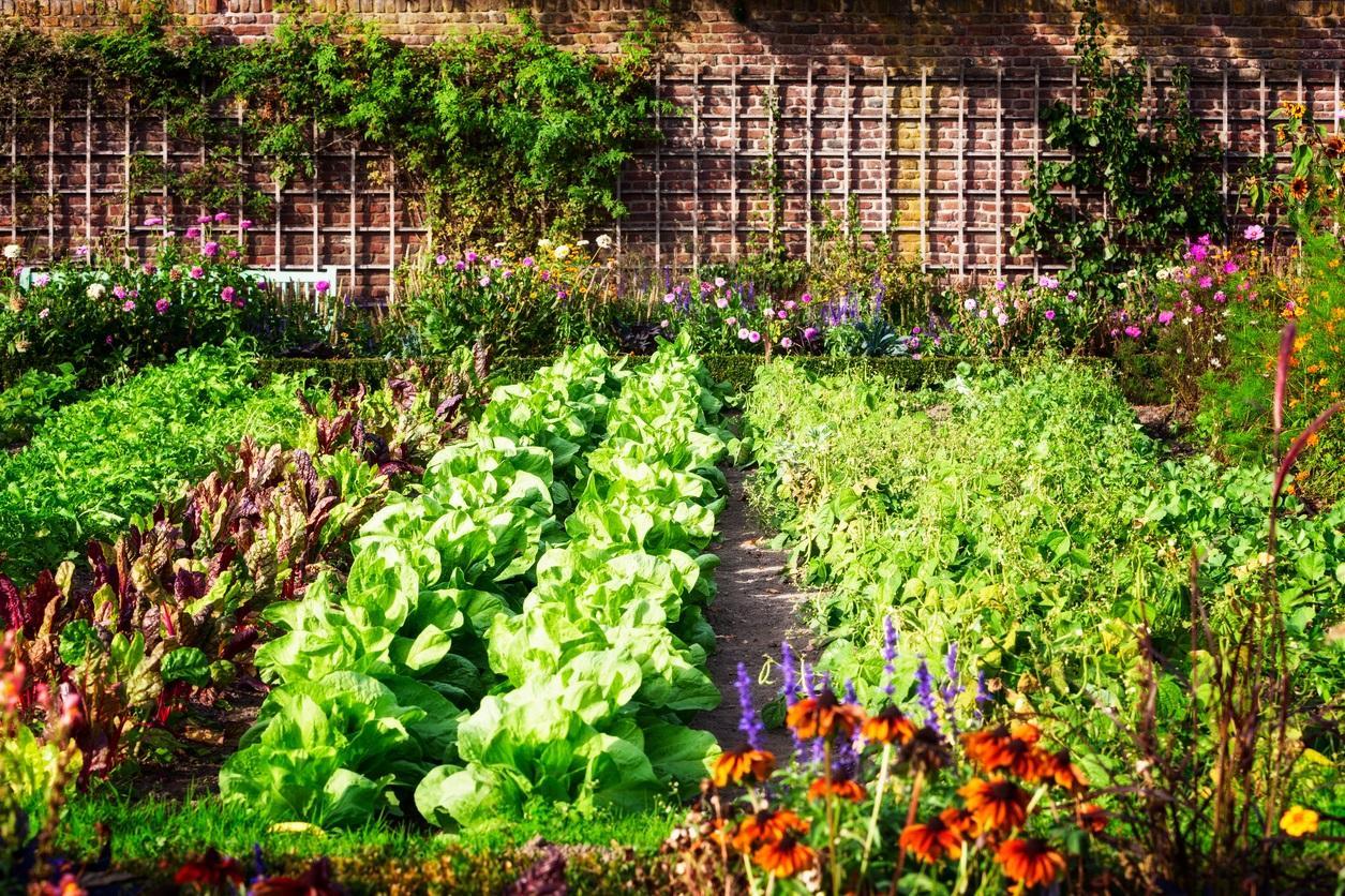 lawn4-1494963908348.jpg
