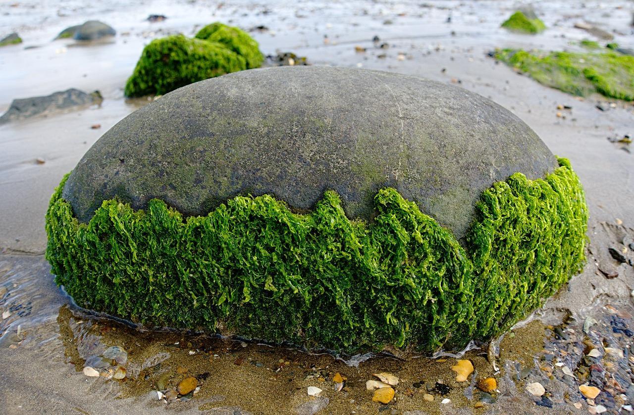 seaweed-2205570_1280-1507226904997-1507226908254.jpg