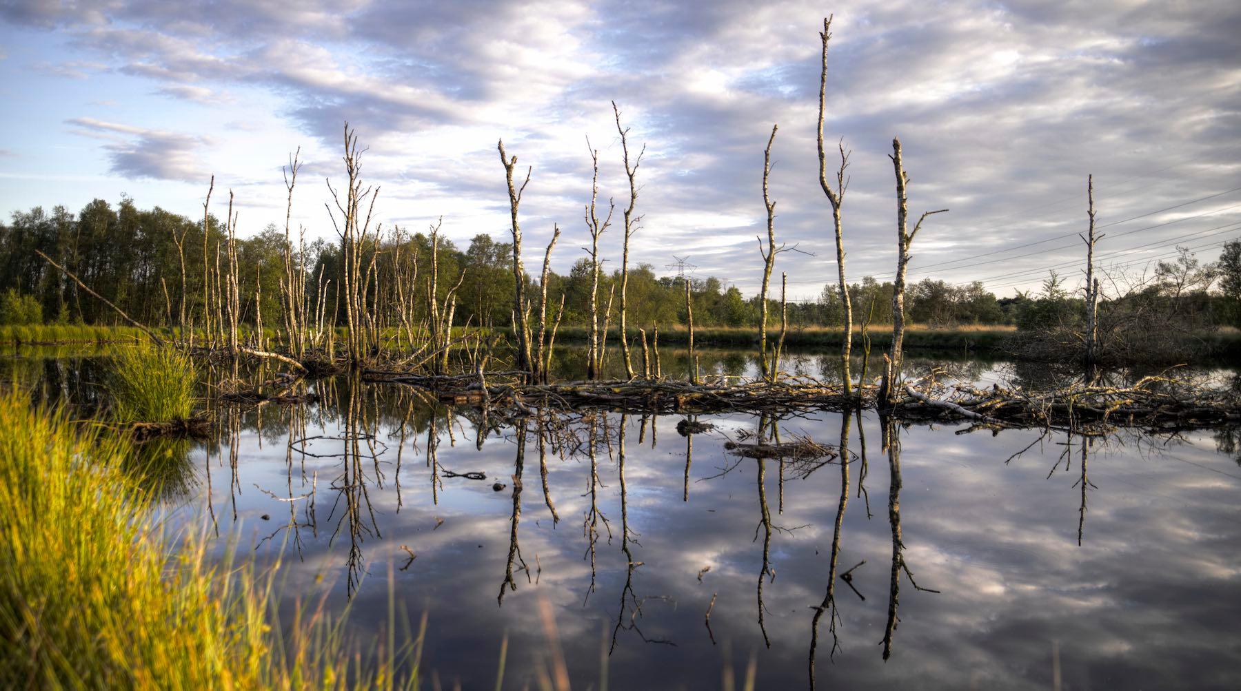 wetlands-1520371077039.jpg