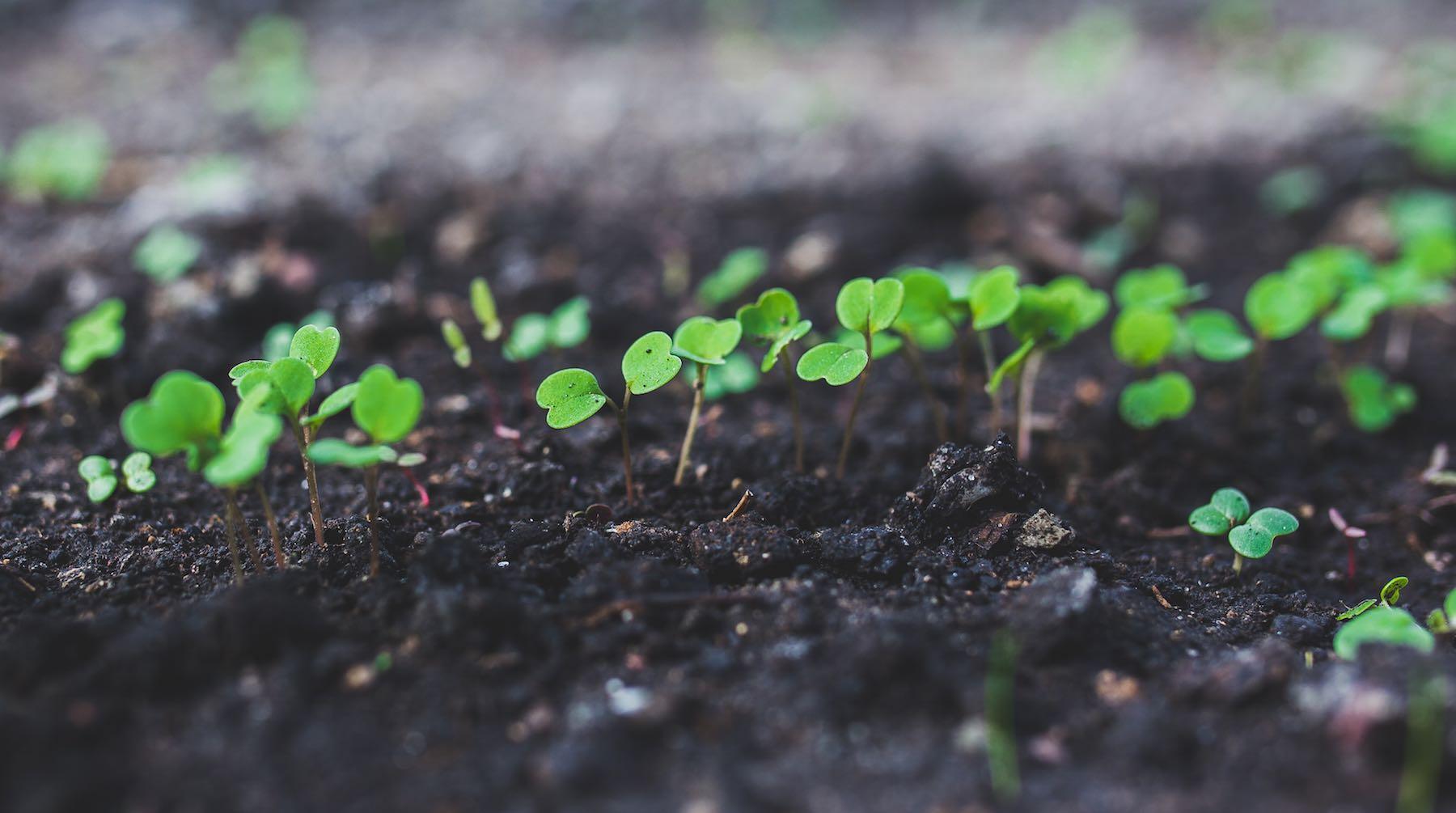 seedlings-1520282595089.jpg