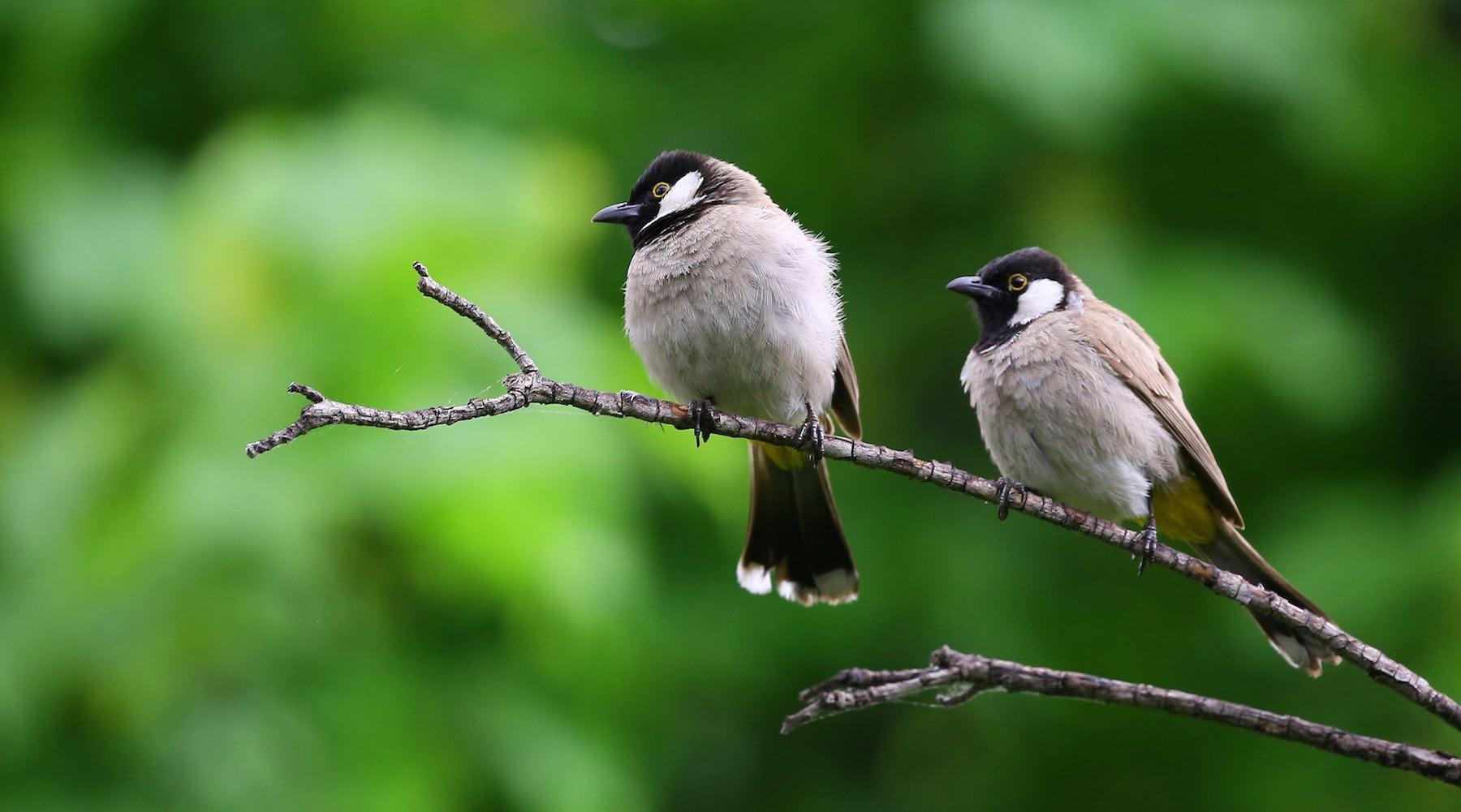 birds-1521056159911.jpg