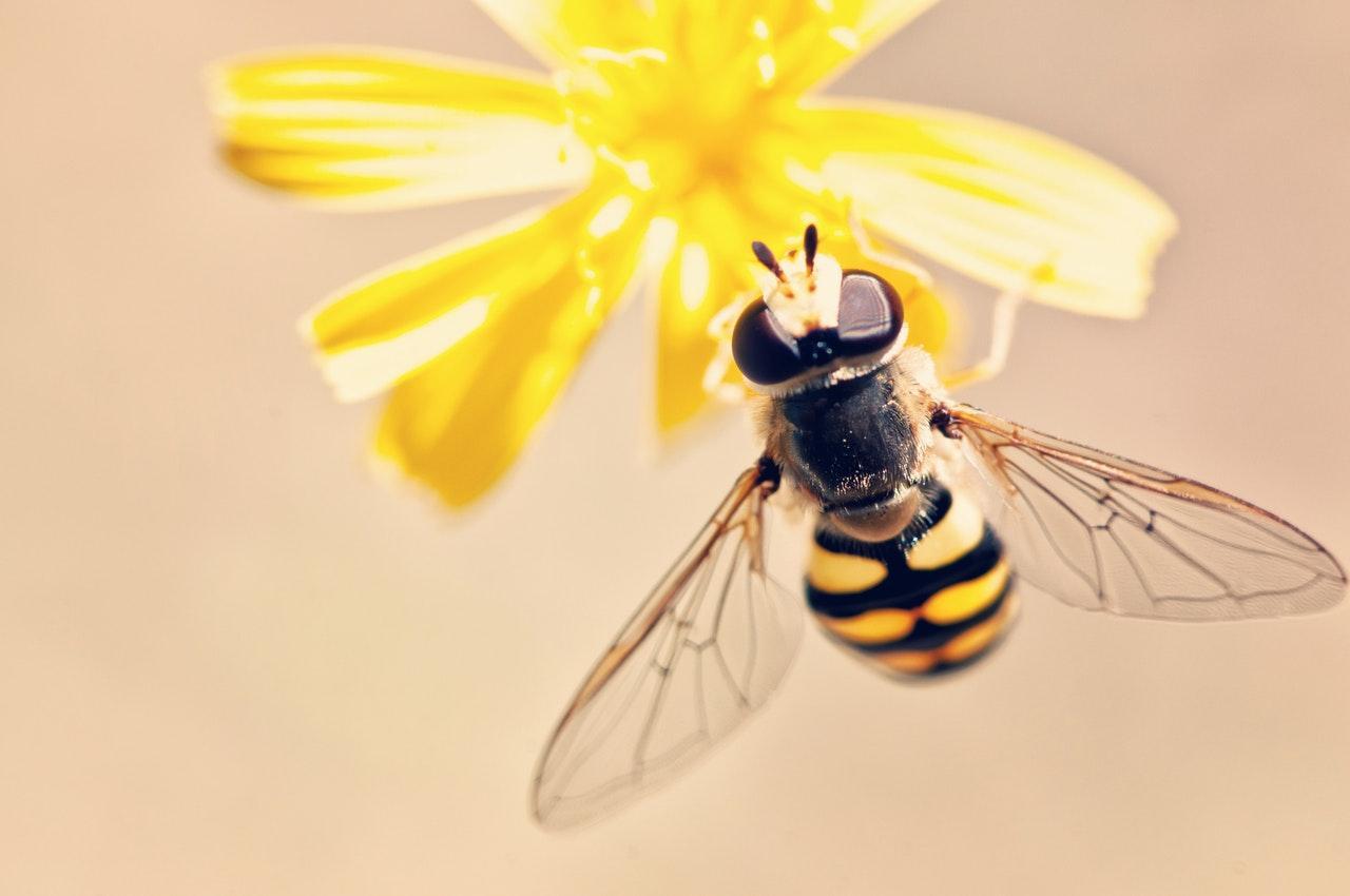 bee-flower-1533069435688-1533069438002.jpeg