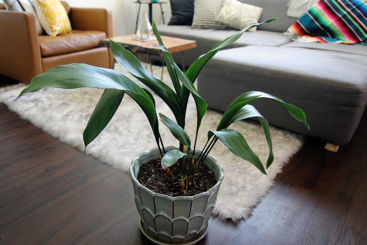 plant3-1520454426688.jpg