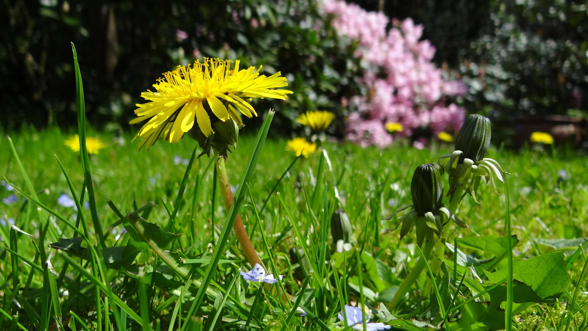 meadow-43467_1920-1501107098338.jpg