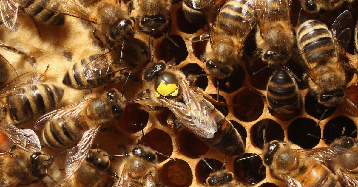 Why would bees reject a queen?
