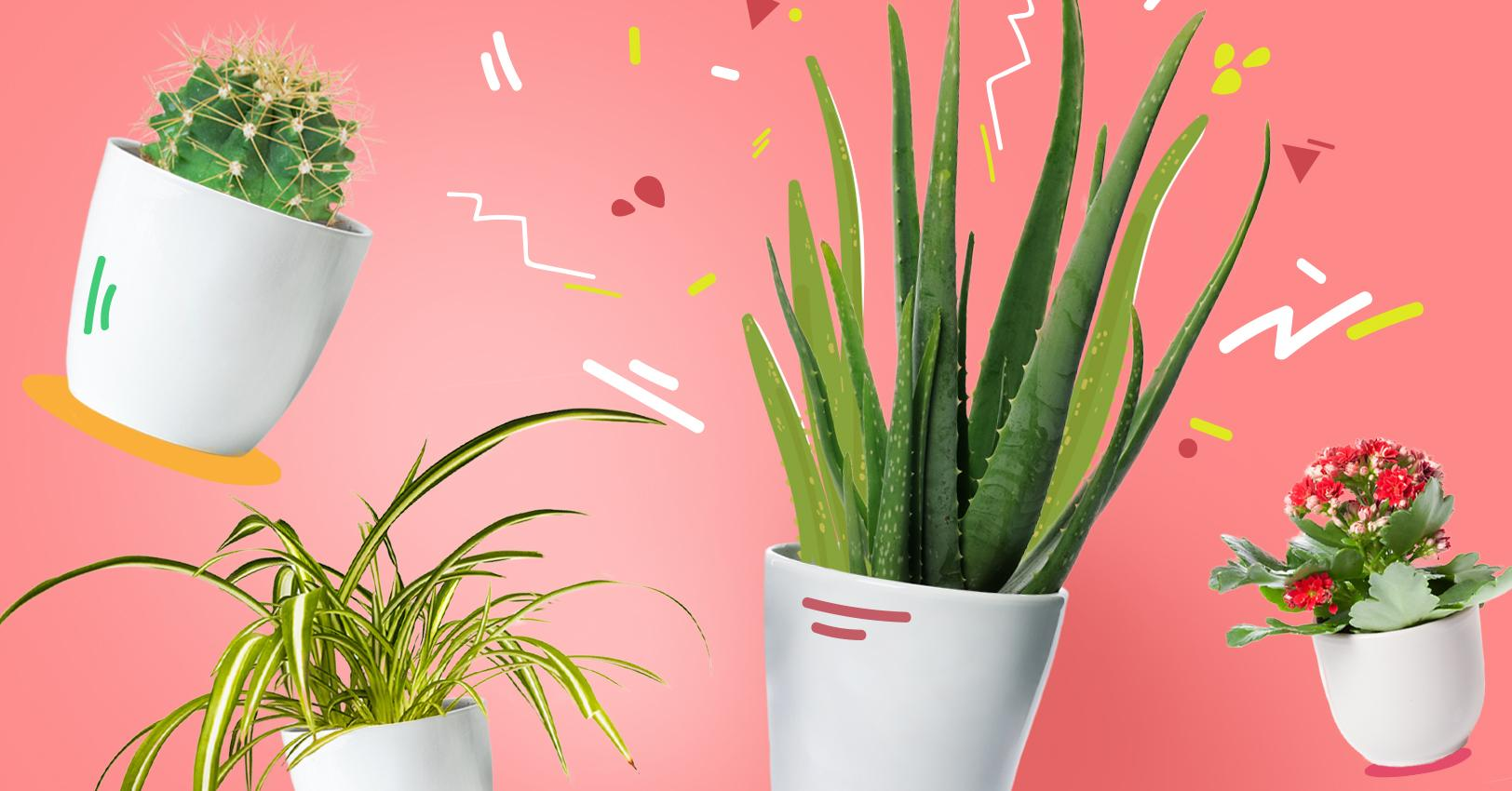 GM PlantPersonalities Feature