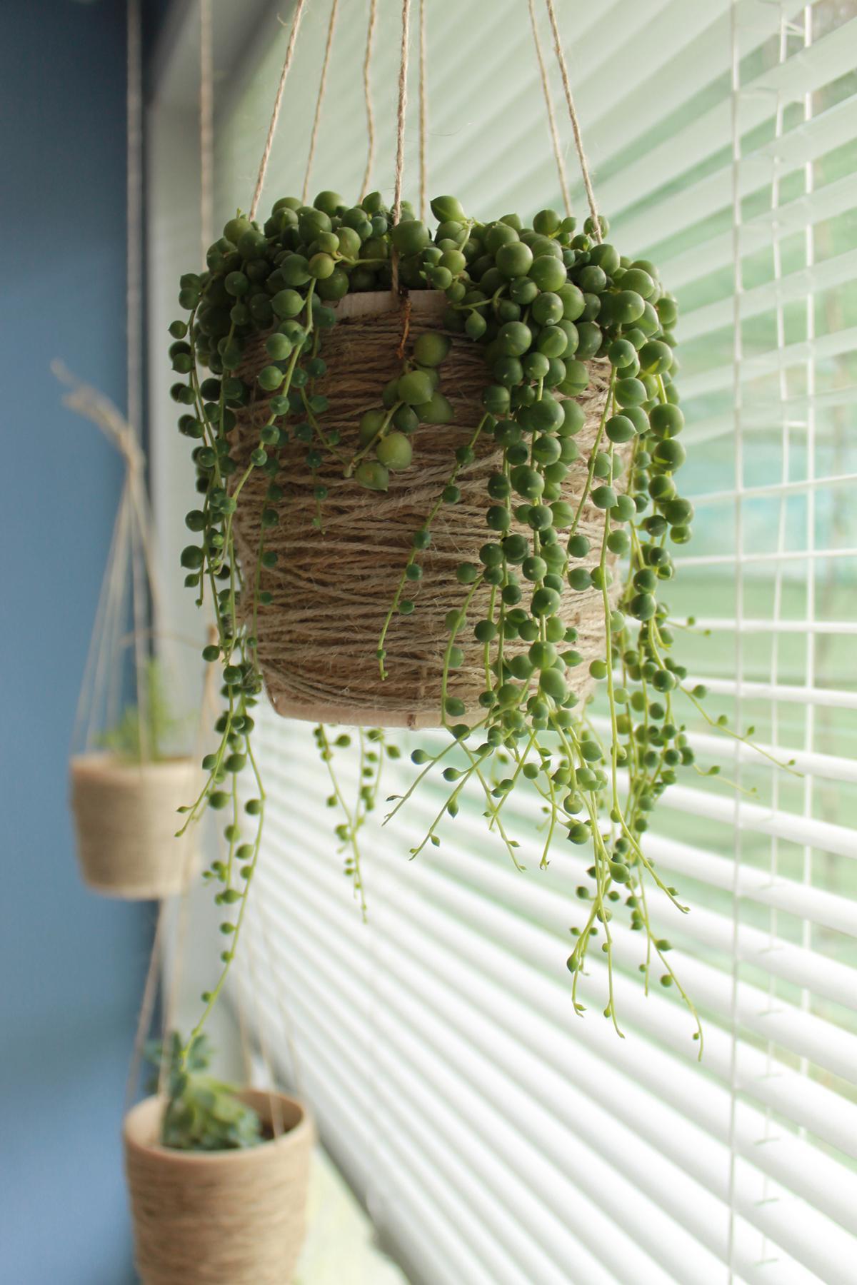 string-of-pears-hanging-indoor-plant-1580934856598.jpg