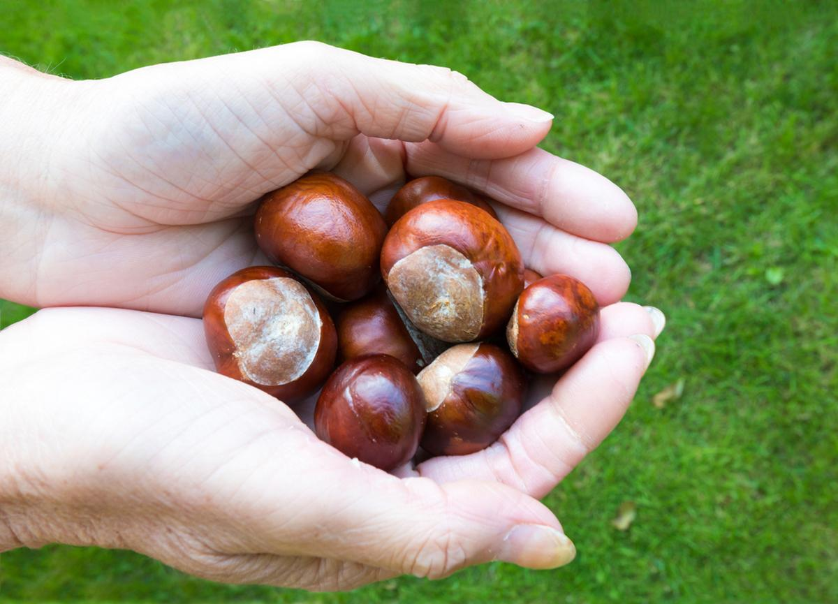 horse-chestnuts-laundry-1547675514045.jpg