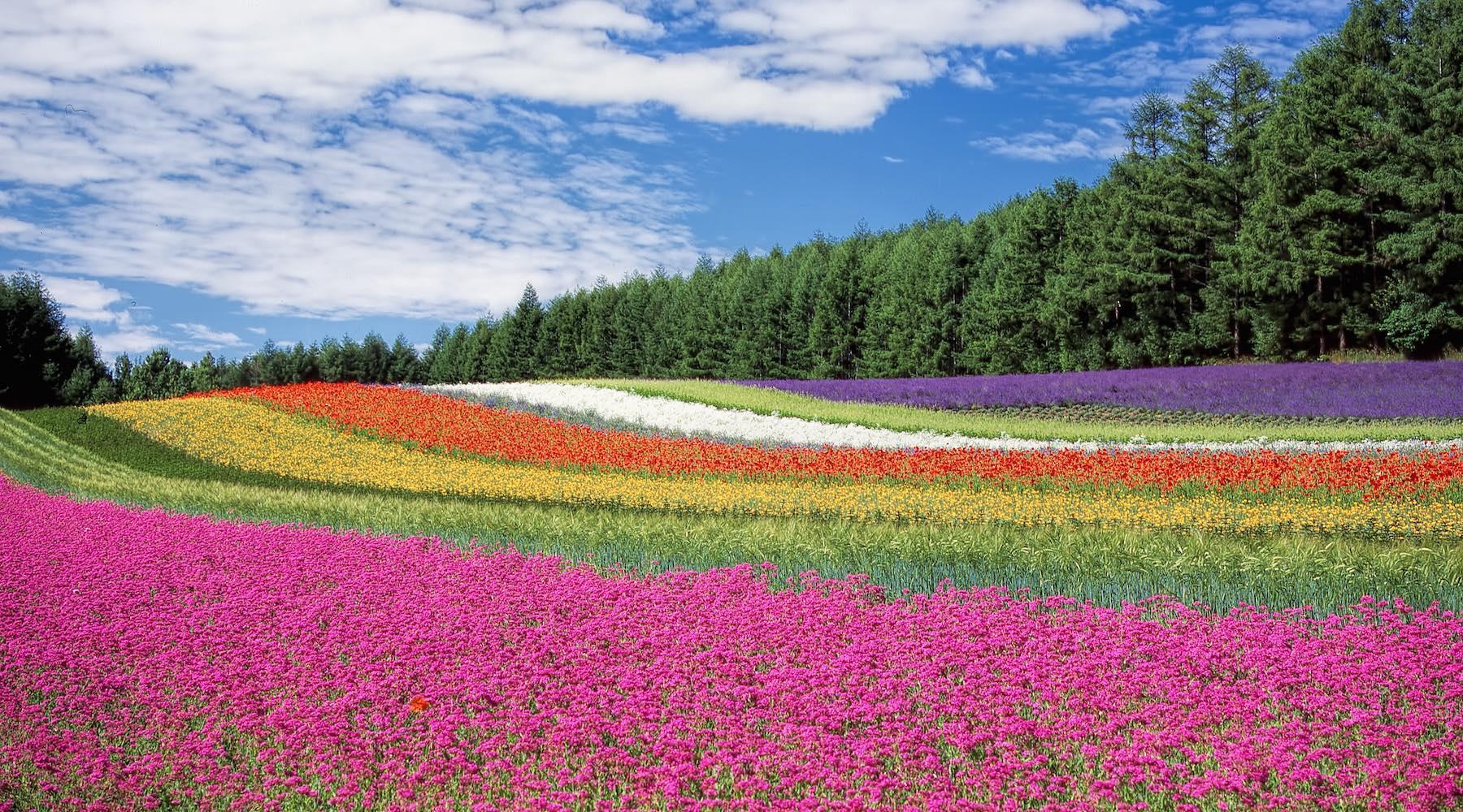 flowers-1517927786012.jpg