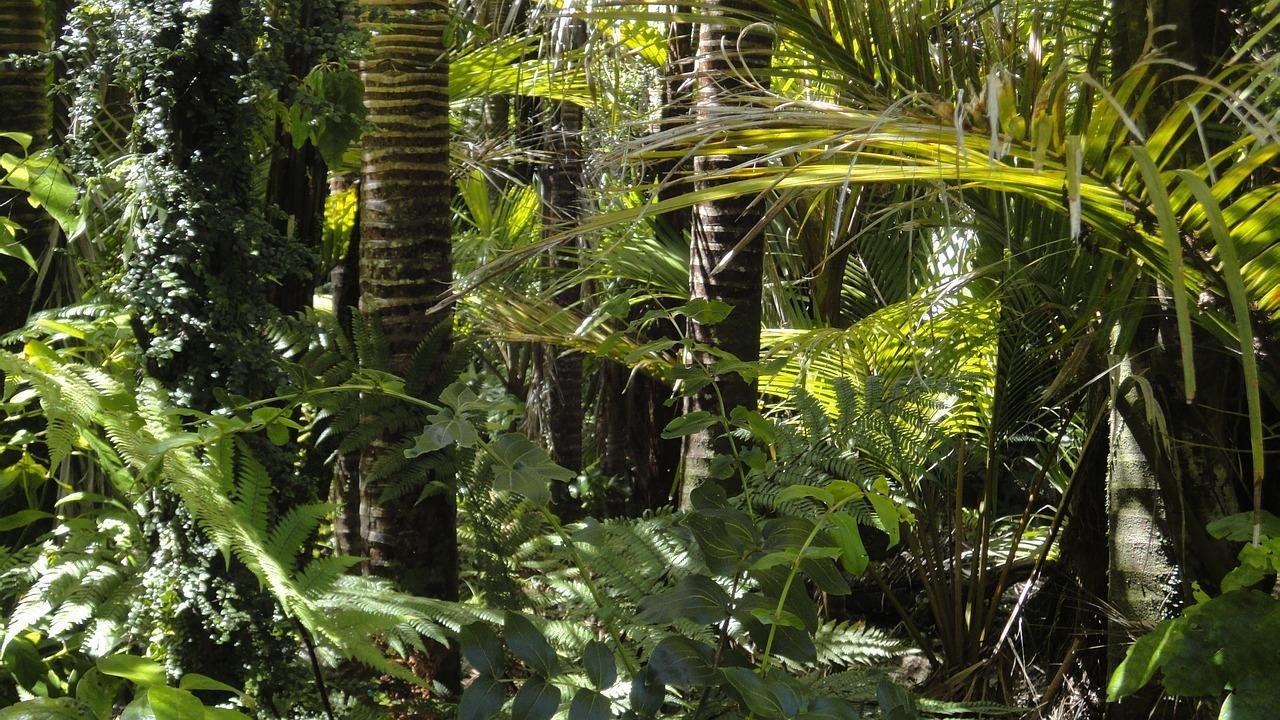 rainforest-78516_1280-1509479617444-1509479620382.jpg