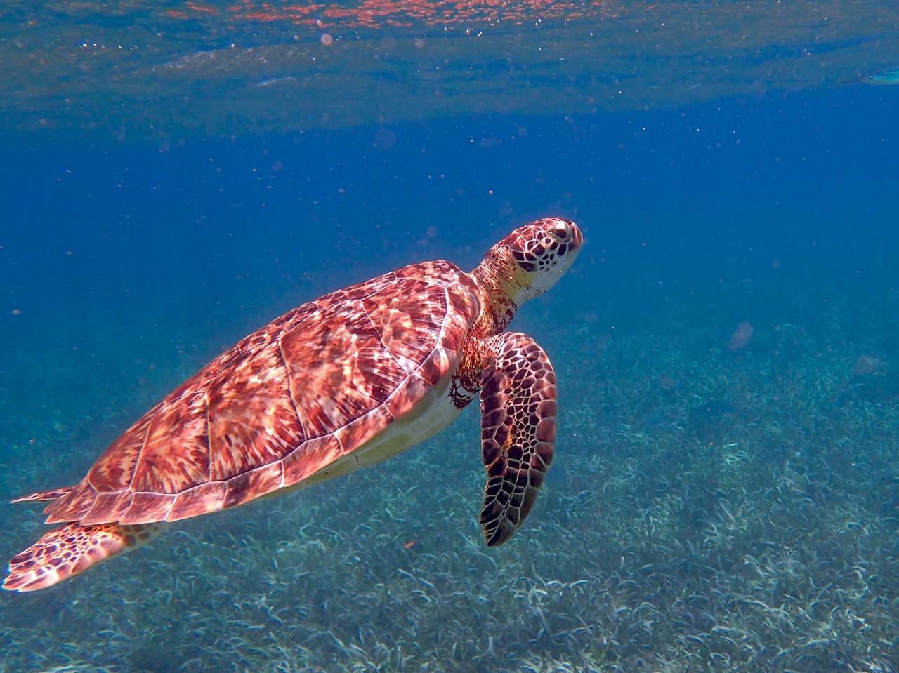 turtle-1958058_1280-1530388042431-1530388045036.jpg