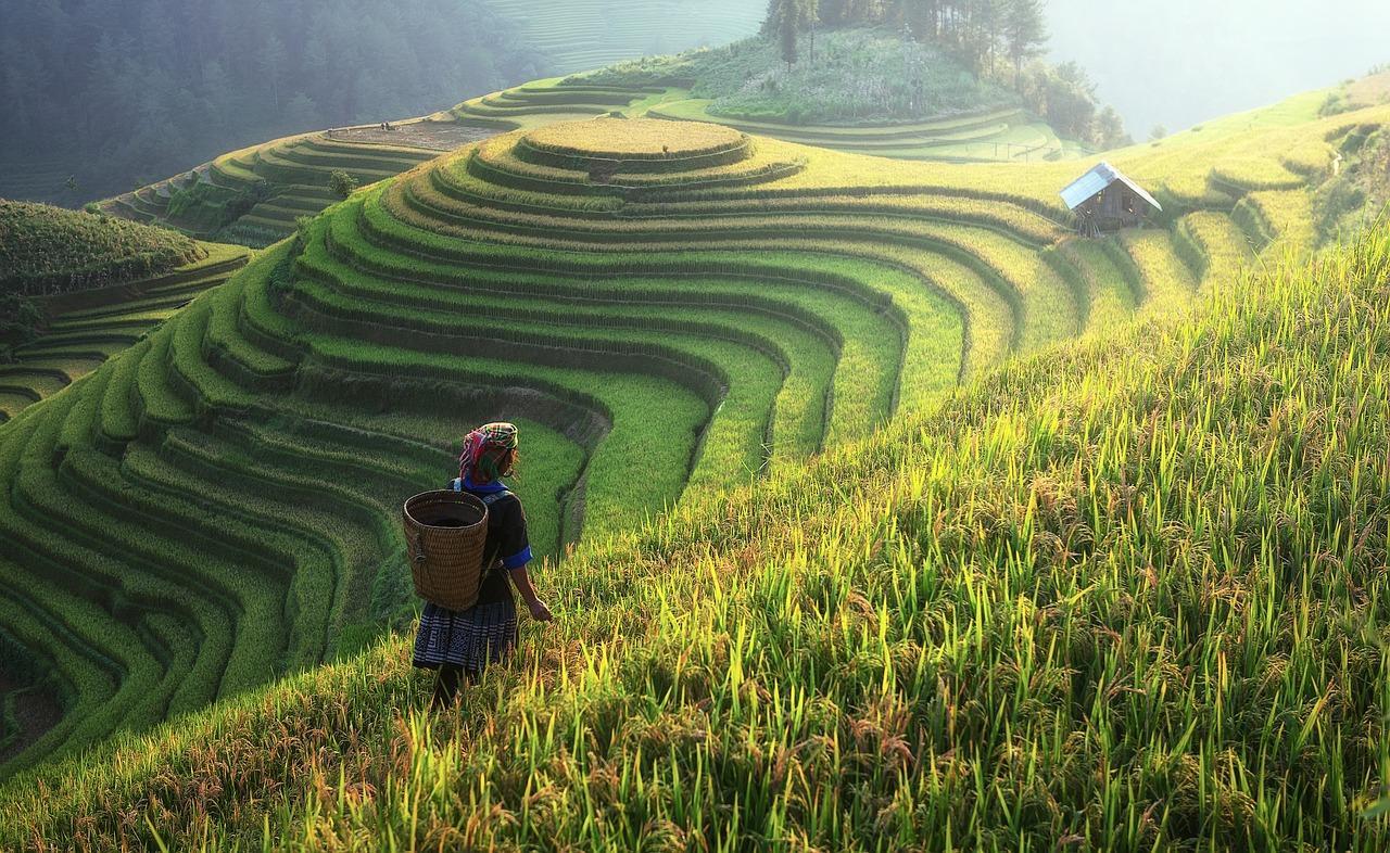 agriculture-1807576_1280-1527282315835.jpg