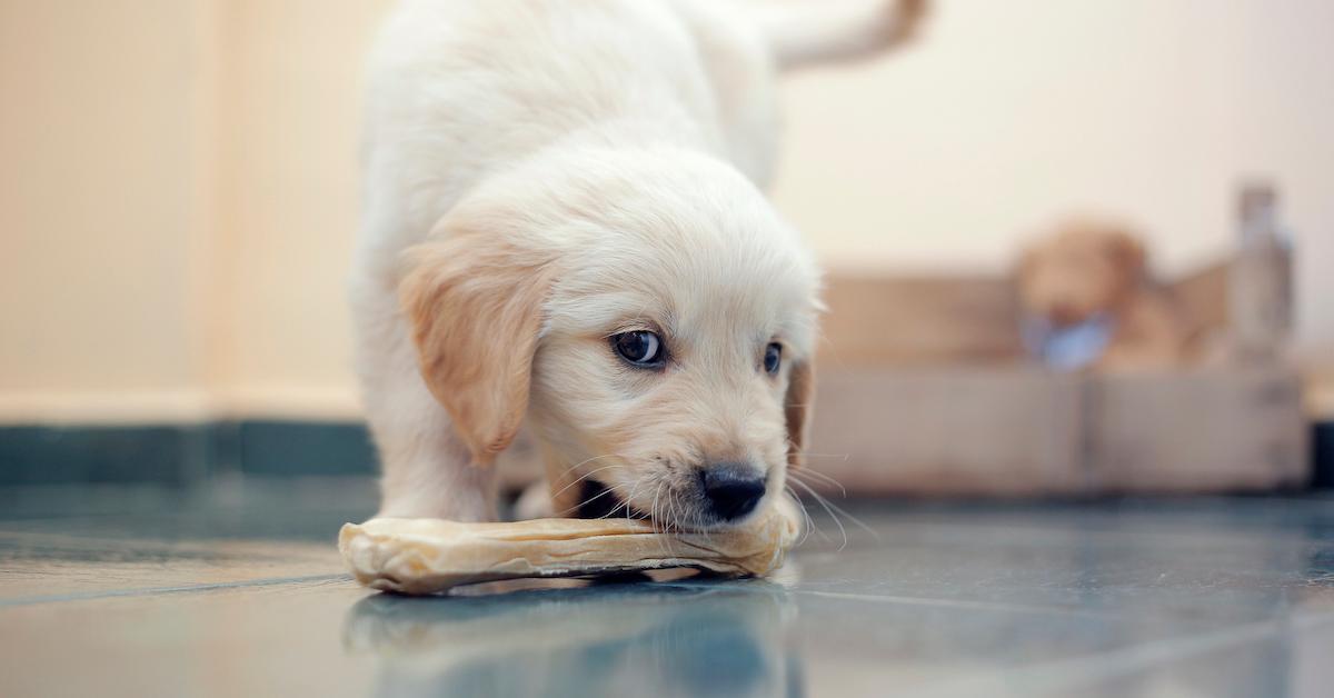 rawhide-dog-1564503444024.jpg