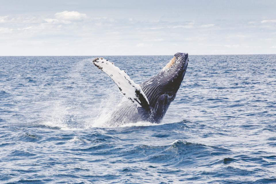 whale-1538415878836-1538415880617.jpg