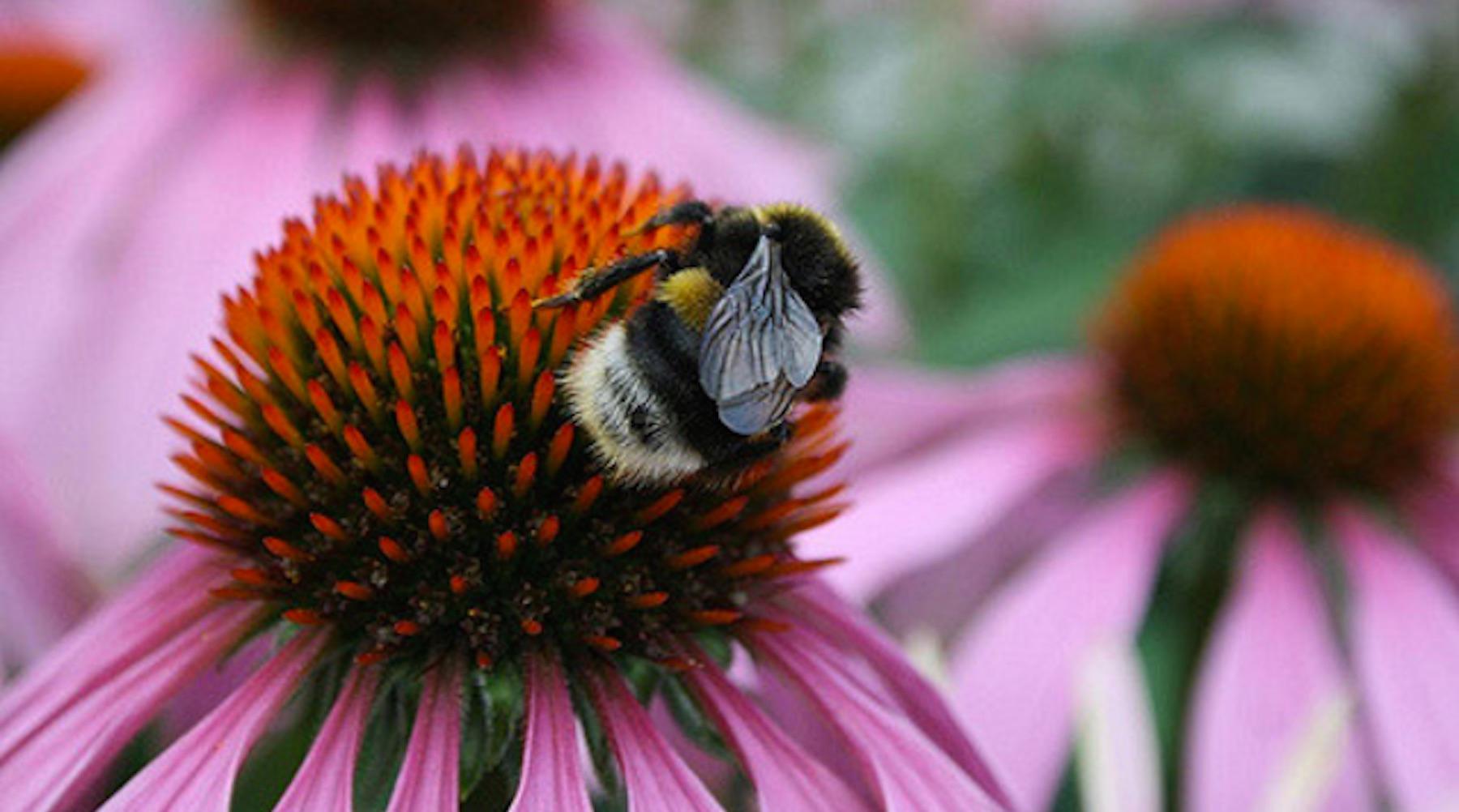 bees-1504032581838.jpg