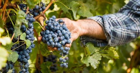 vineyard-grapes-climate-change-wine-1580324937573.jpg
