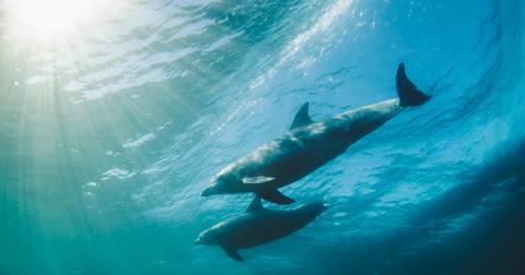 dolphin-corpse-beach-1553183143418.jpg