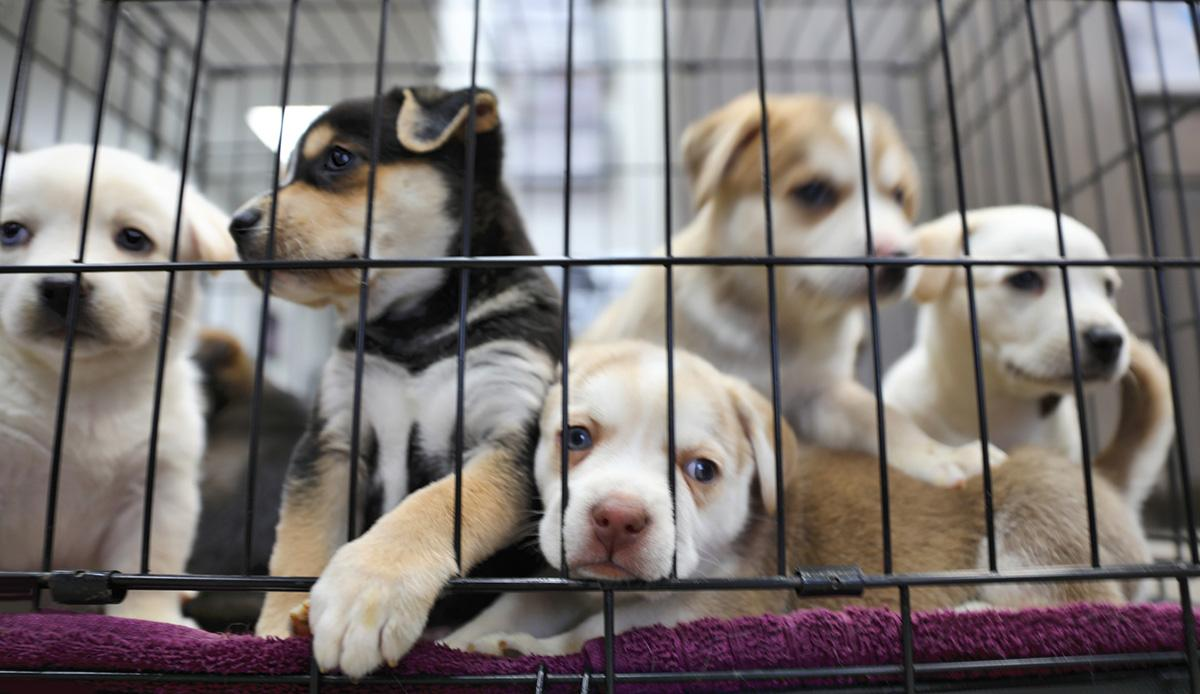 rescue-dogs--1561558751992.jpg