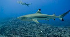 Sharks Climate Change