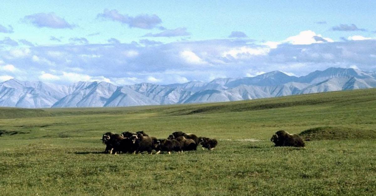 lawsuit trump drilling arctic national wildlife refuge
