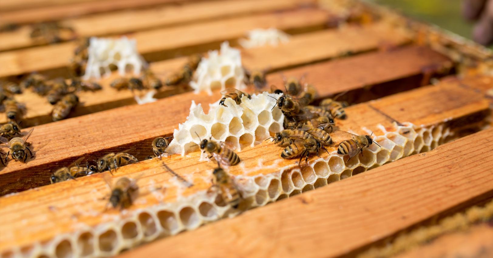 GM-Home-BeeStory-IMG6-1527864827102.jpg