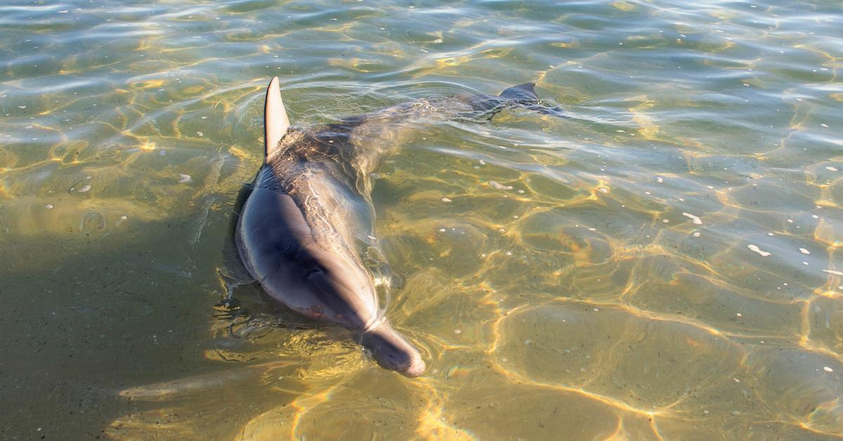 baby-dolphin-fort-myers-florida-plastic-1556571649681.jpg