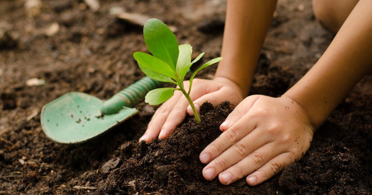 philippines-tree-planting-graduate-1559228891741.jpg