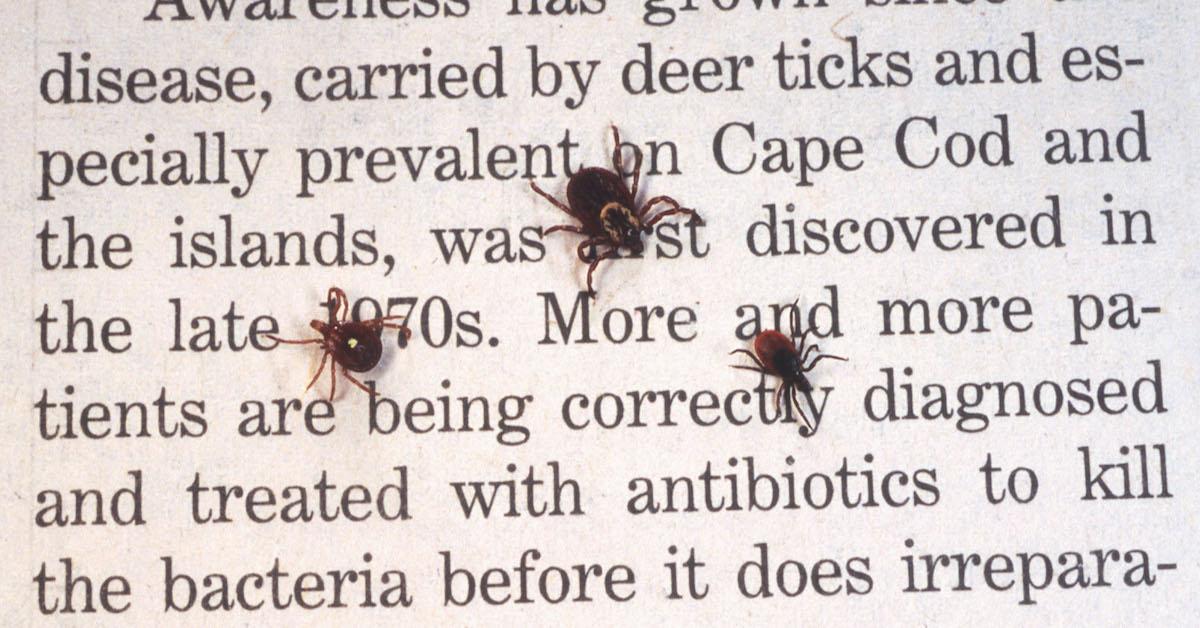 Natural ways to repel ticks