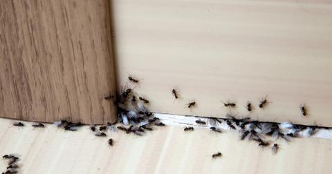 how-to-get-rid-of-ants-1-1605707725742.jpg