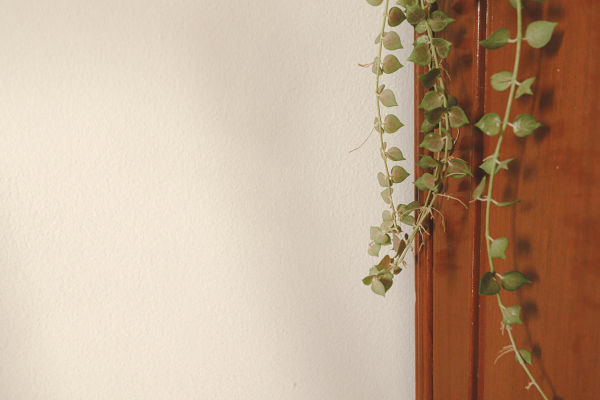 string-of-hearts-indoor-hanging-plant-1580934837502.jpg