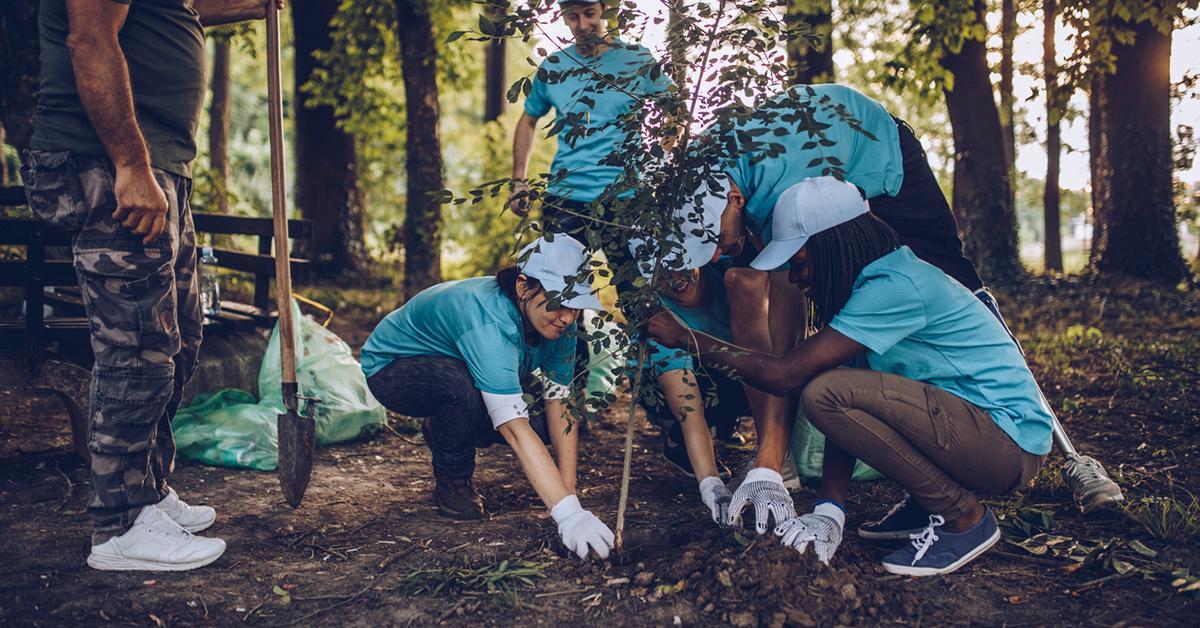 planting trees earth greener