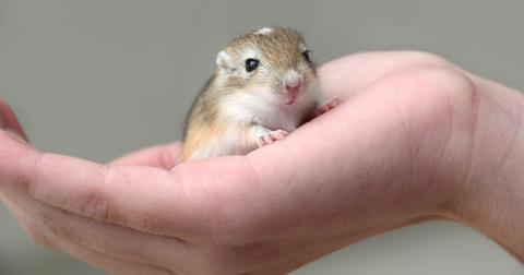 The Best Small Pets For Kids