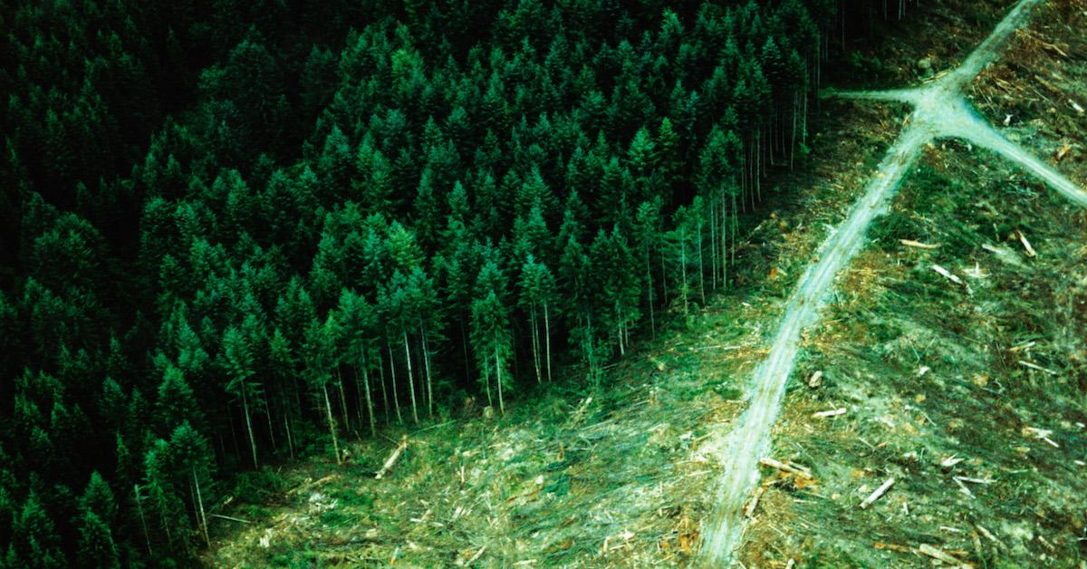 what is sustainable forestry