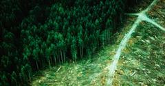 什么是可持续林业