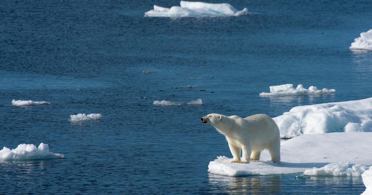 polar-bears-1587675888578.jpg