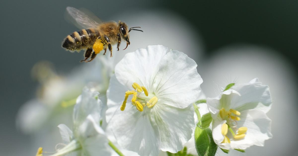 What kinds of bees are endangered?