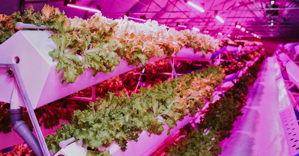 Aeroponic Farming