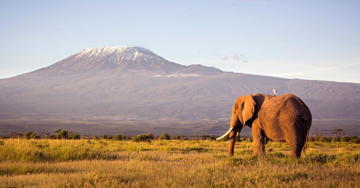 world-elephant-day-2020-1597180786251.jpg