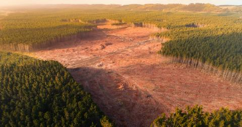 deforestation-pandemics-1592506890461.jpg