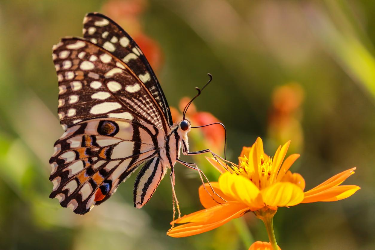 which-plants-attract-butterflies-1567627914261.jpg