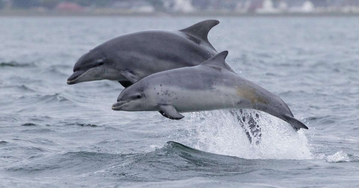 Wild Dolphin Interactions With Humans Prohibited in New Zealand's Bay of Islands