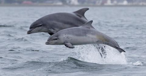 bottlenose-dolphin-1567008498916.jpg