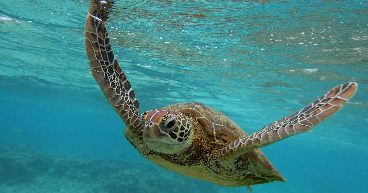 World Turtle Day 2019: 5 Ways to Protect Turtles and Tortoises