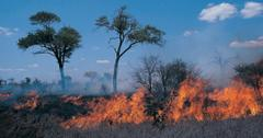Nepal Wildfires