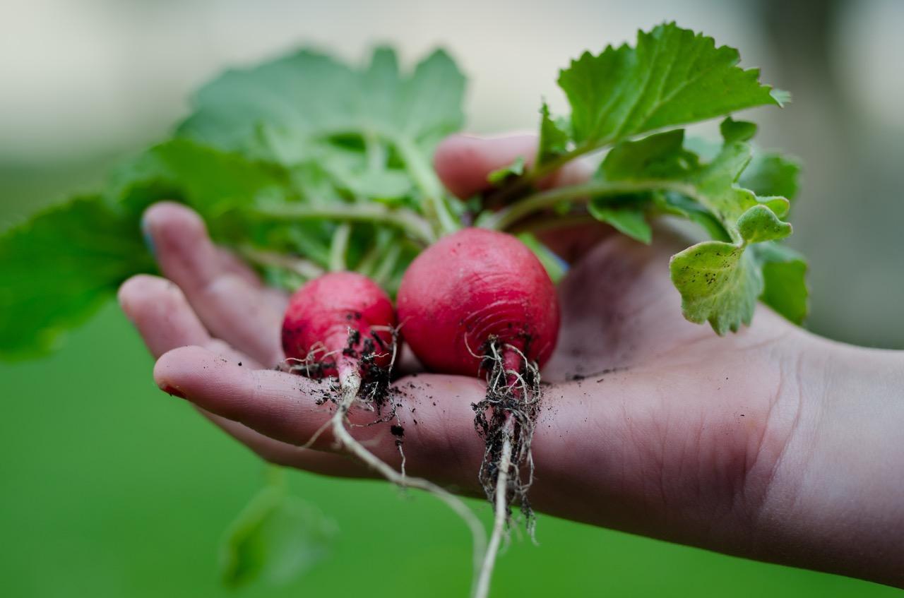 healthy-vegetables-restaurant-nature-1493392589545.jpg